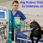 غسيل الكلي للكلاب ,dog Kidney Dialysis